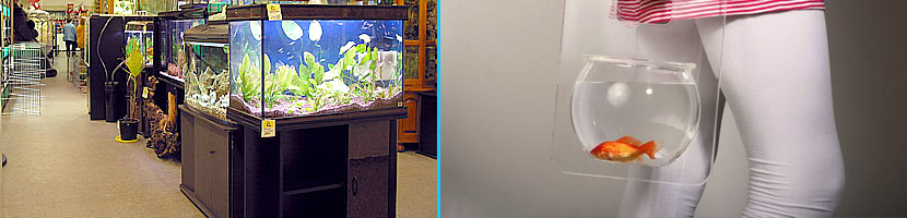 Tips for Buying Aquarium Fish