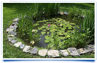 Keeping your pond beautiful in spring