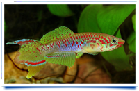 8th exhibition of Killifish